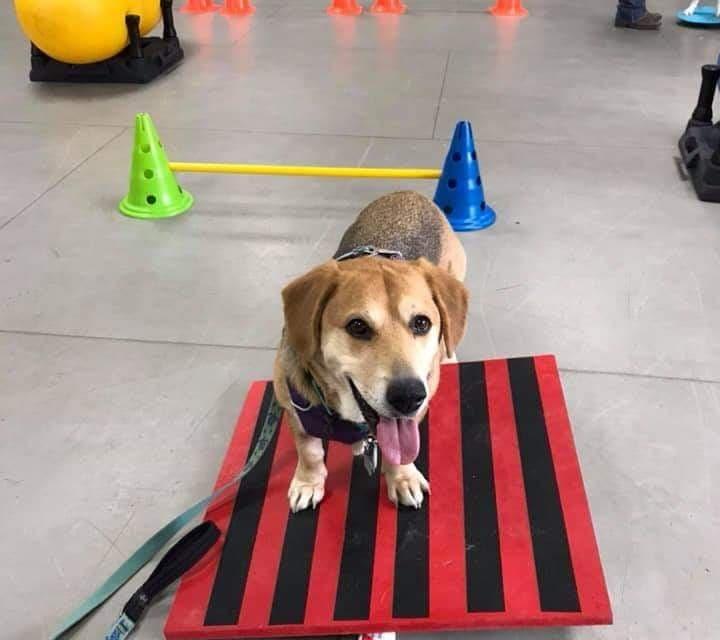 DIY Tilt Board