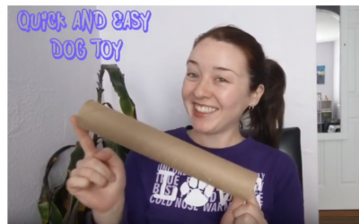 Quick & Easy Paper Towel Dog Toy