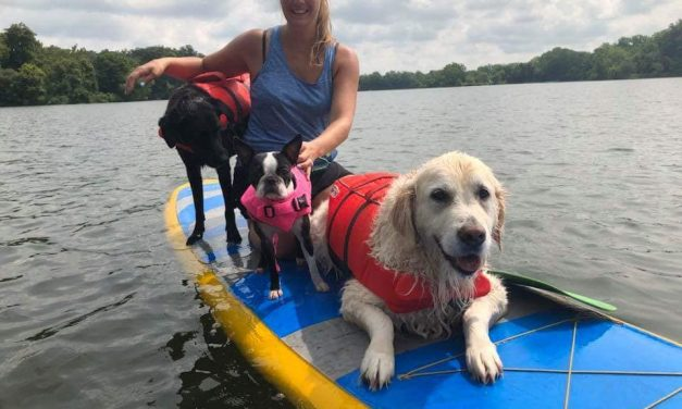 How to Paddle board with your Dog